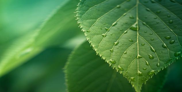 leaf 633x400